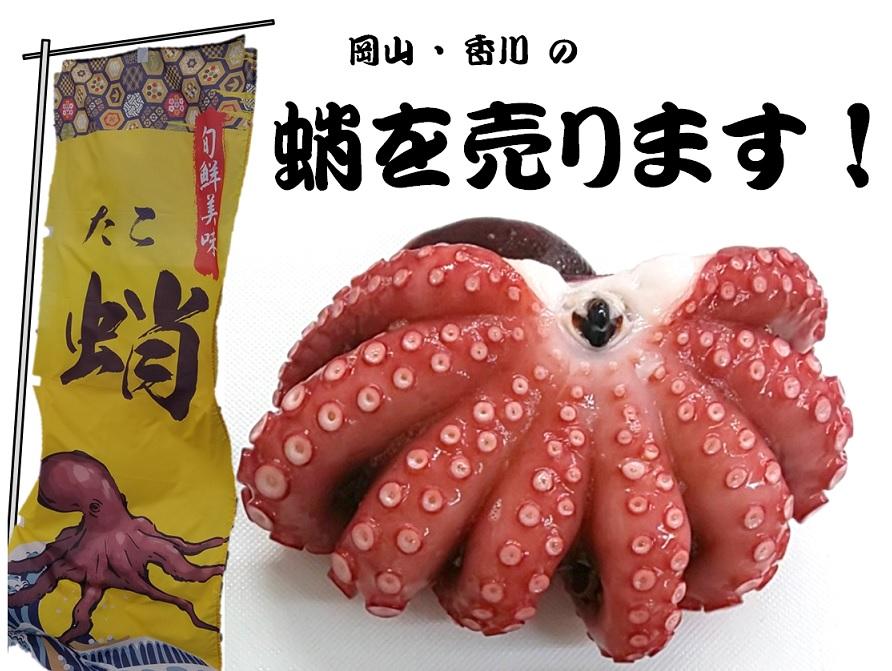蛸を売ります。