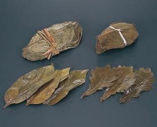 柿の葉 50枚束 柏の葉(緑)MS