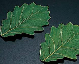 柏の葉(緑)S